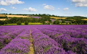 Farm Soap Co. Lavender