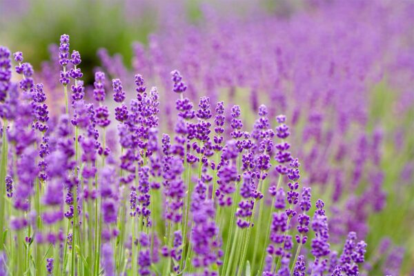 Growing herbs for skincare